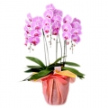 send orchid plant to korea